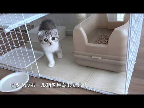 初めての段ボールとかくれんぼと猫パンチ[ぐう23]/Cat playing hidden in cardboard.