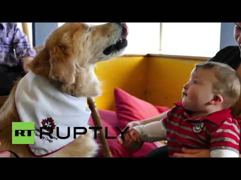 Canada: Meet Smiley the blind therapy dog that helps children read