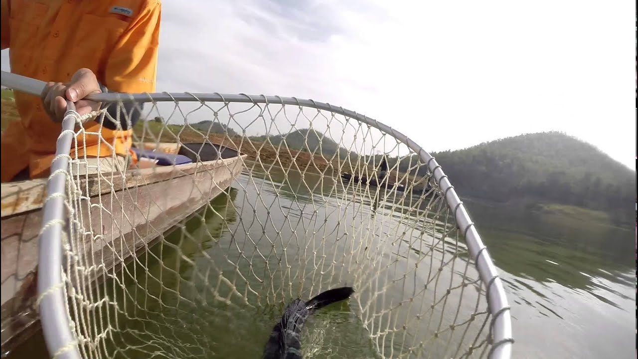Fishing Video !!! Giant Snakehead !!! Topwater Actions !!! Mama Toman Chase- BKKGUY