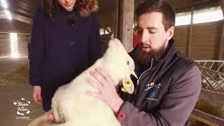Terres de France. La fabuleuse histoire des moutons Mérinos de la Bergerie Nationale de Rambouillet
