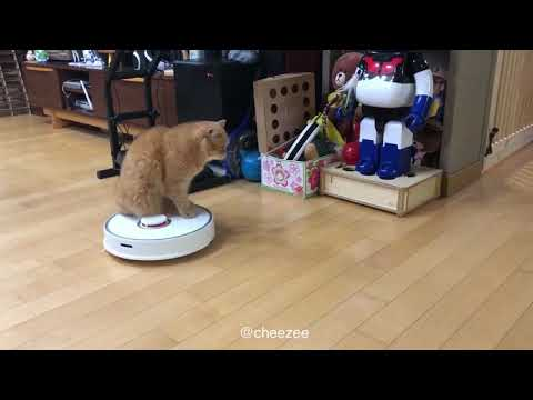 Zeon cat riding robot vacuum