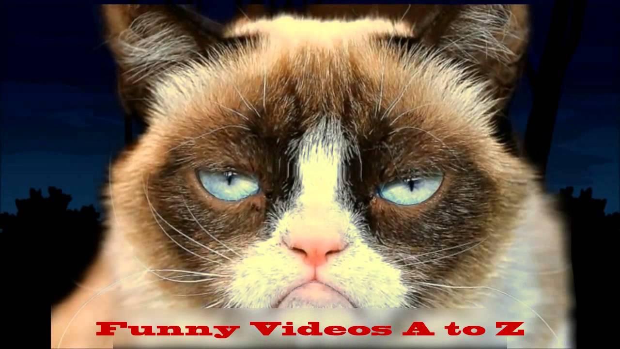 Funny Video Cat Happy Birthday Song