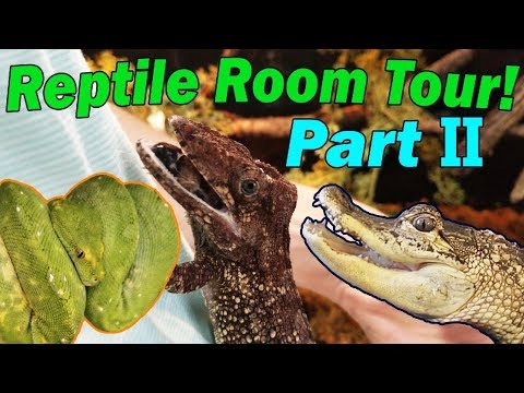 2018 REPTILE ROOM TOUR- Part 2!