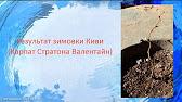 Оптовая продажа натуральных масел, в частности амарантовое масло от производителя kasap. Высокие. Масло амаранта купить оптом заказать.