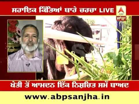 ABP SANJHA AGRICULTURE SPECIAL:  Benefits of Goat husbandry for Punjab Farmers