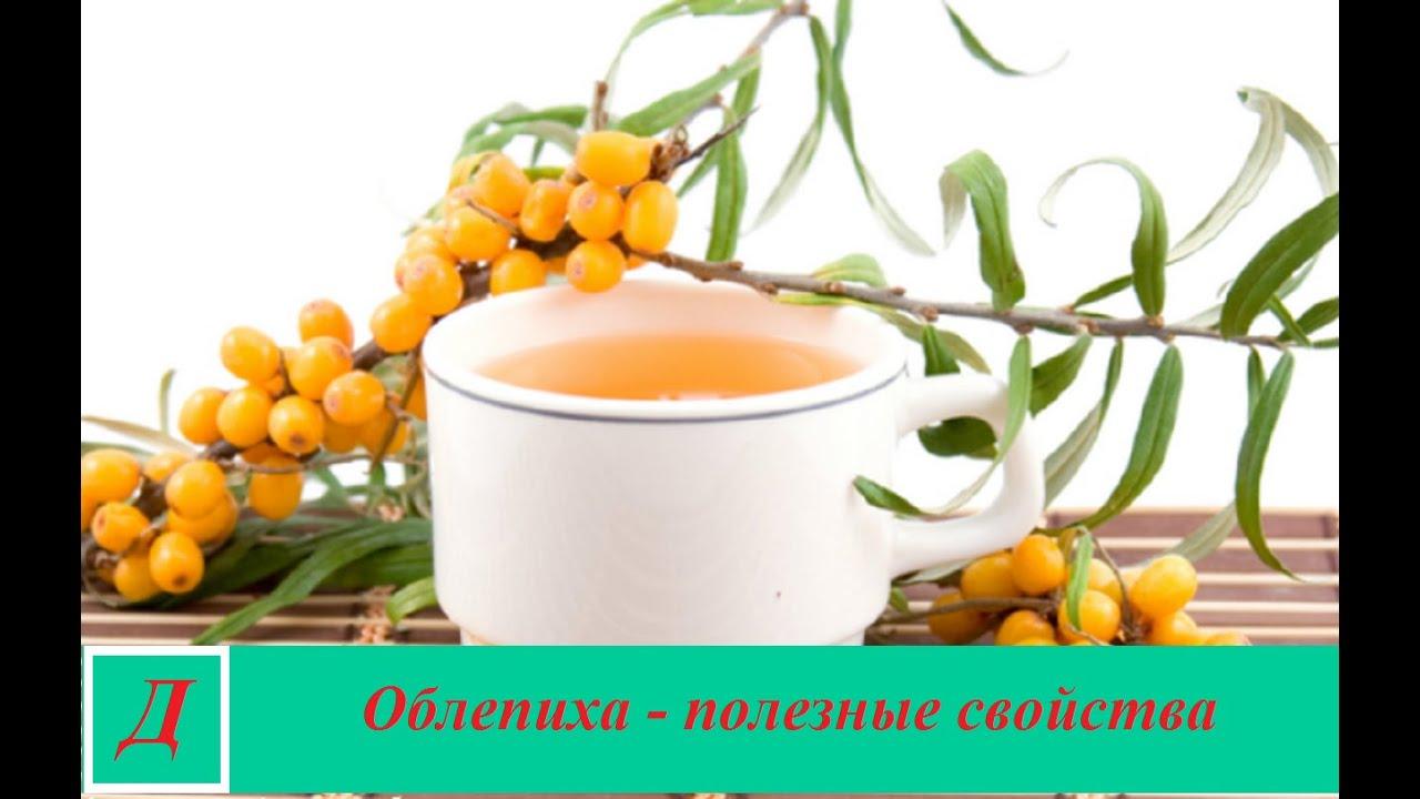 Облепиха — полезные свойства и противопоказания масла облепихи и ягод, польза и вред для здоровья