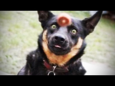 Dog Fails 🐶  Dogs Failing at Being Dogs [Funny Pets]