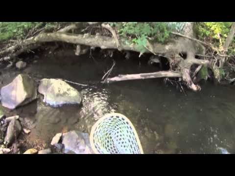 Fly Fishing New Jersey, Nymphing for Wild Trout