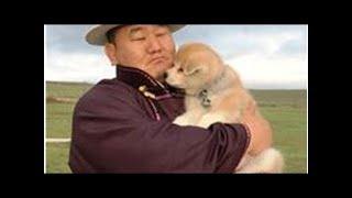 朝青龍「マサオが来た!! 可愛い、可愛い!!」 モンゴルで秋田犬贈呈...