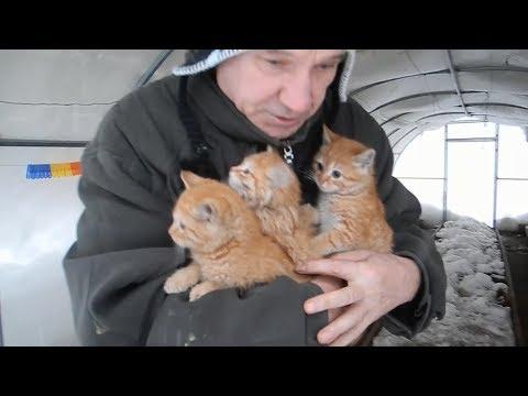 Рыжие котята попросили о помощи!