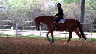 Riverdance - Jump Training 22 Mar 2016