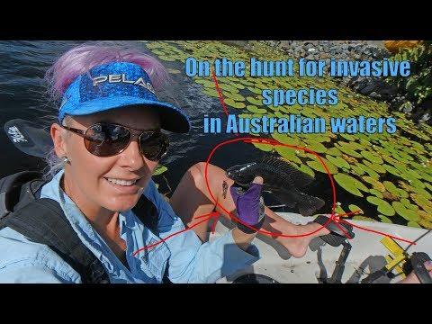 Invasive Fish Species In Australia
