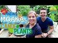 Finding Moana's Canoe Plants! | Maddie Moate