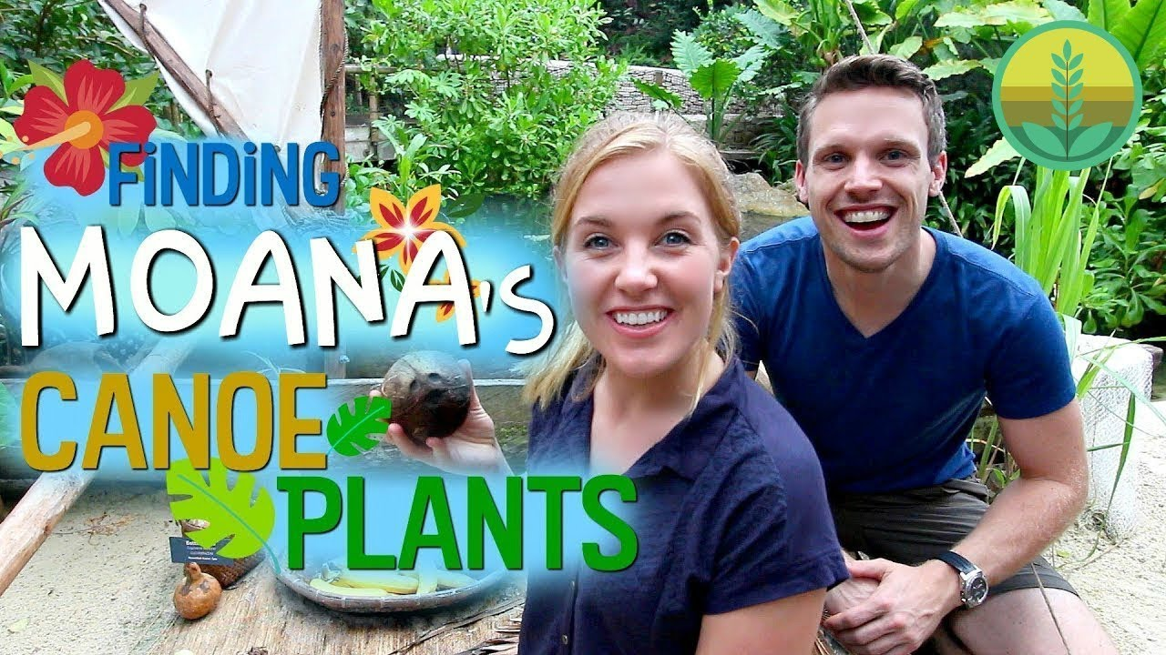 Finding Moana's Canoe Plants! | Maddie Moate