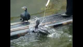 صيد السمك في الصين mpg