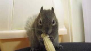 ベビーコーンを食べ始めたら止まらなくなった俵太先生。 Blog:http://am...