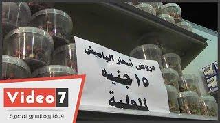 عرض التموين للمصريين.. ياميش رمضان فى المجمعات الاستهلاكية بـ15 جنيها