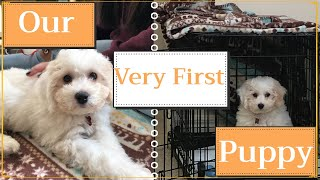 the day we brought our new puppy home   schnoodle puppy