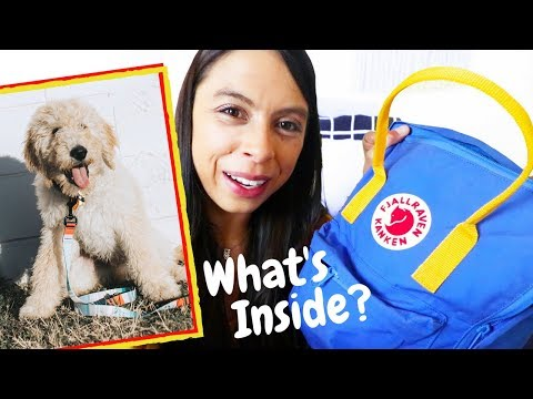 Must Have 'Puppy Essentials!!!' // Dog Haul!