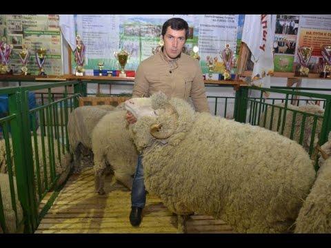 Электропастух для овец каталог оборудования для сельского хозяйства.