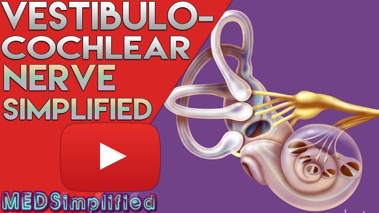 Vestibulocochlear Nerve Anatomy SIMPLIFIED - YouTube