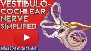Vestibulocochlear Nerve Anatomy SIMPLIFIED
