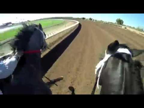 Скачки на лошадях глазами наездника