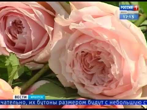 Роз на 700 тысяч рублей. В Иркутске проходит фестиваль флористики «Экофлора»