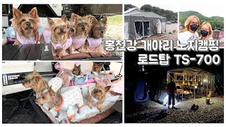 홍천강 개야리 노지캠핑 ㅣ 강아지동반여행 ㅣ 로드탑트레…