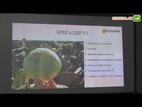 Бригадир F1 капуста (Clause) семинар 22.11.2016