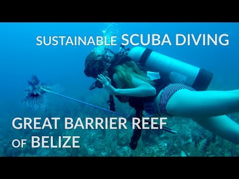 Sustainable Scuba Diving (Spear Fishing) For Lion Fish At Great Barrier Reef Of Belize
