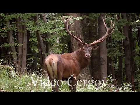 Vzpomínka na říji - video Čergov
