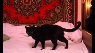 Кошка Клякса - Нежить