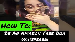 AMAZON TREE BOA || TAMING YOUR BEAST
