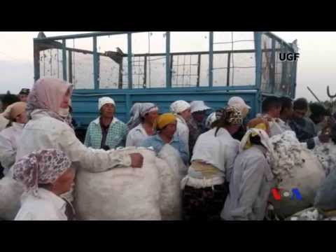Cotton Campaign and Forced Labor in Uzbekistan - Interview with VOA Uzbek