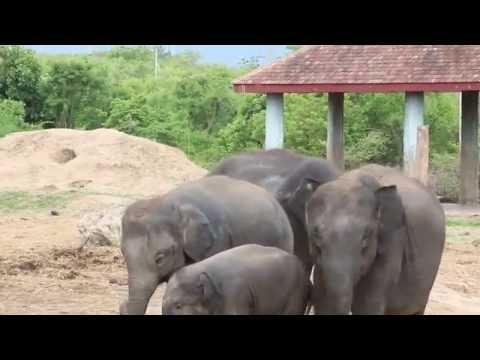 Elephants at Naypyitaw Zoo, Myanmar