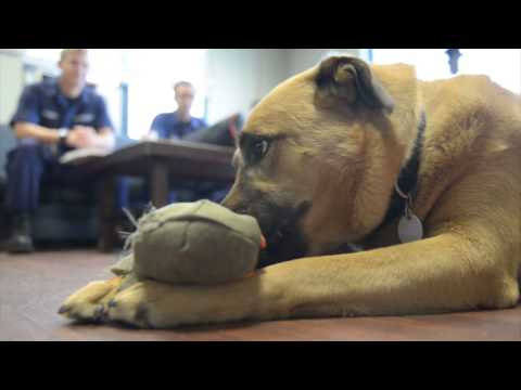 Meet Diesel: Mascot for Coast Guard Station King's Point, NY