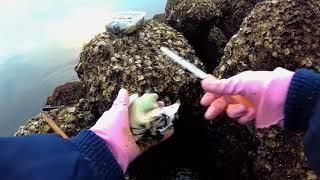 4K  2018. 2. 21  天然特大 真牡蠣 牡蠣打ち~下処理~をして牡蠣フライにして食す。