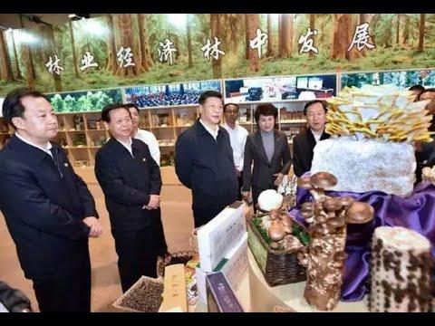 Chinese President Visits Yichun, Northeast China