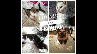 VLOG Почему у нас 4 кошки/ Сонное царство/ Выбираем обои
