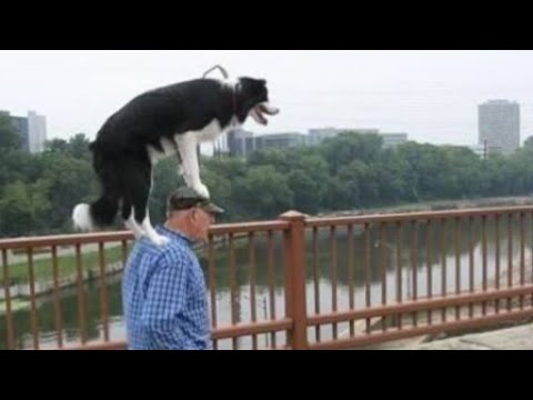 YOU will LAUGH YOUR SOUL OUT! – The BEST and FUNNIEST DOG Compilation