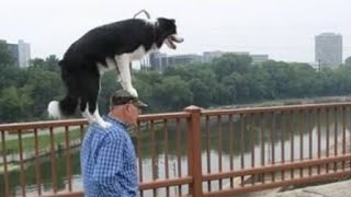 YOU will LAUGH YOUR SOUL OUT! - The BEST and FUNNIEST DOG Compilation