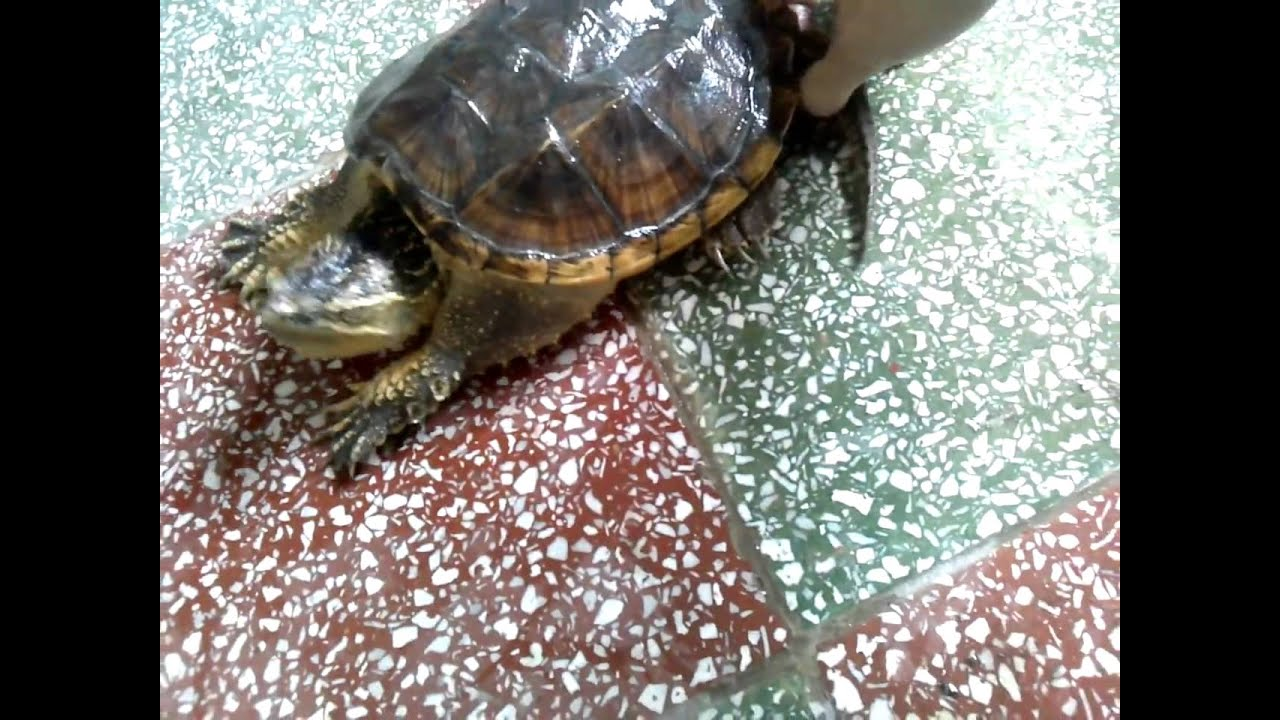 How to Buy a Turtle recommend
