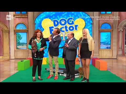 Dog Factor VIP 06.10.2017
