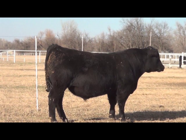 Express Ranches Lot 60