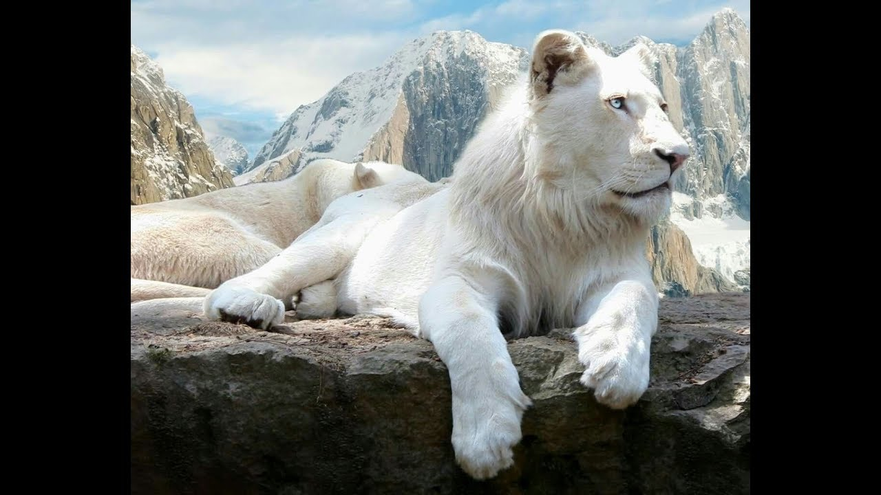 Löwen Doku
