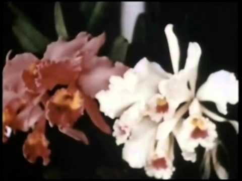 Orquesta Broadway - A Santa Bárbara - Video Music