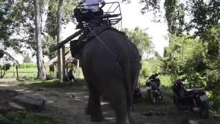 Cưỡi voi khám phá du lịch Bản Đôn - Voi Bản Đôn - Voi Tây Nguyên
