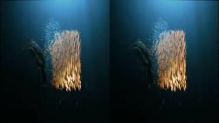 Orange 3D 3D version SBS de ROJO on Vimeo