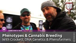 Phenotypes & Cannabis Breeding w/ Crockett,DNA Genetics & Phenofarmers - Smokers Guide TV California